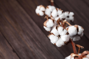 Branch of white cotton flowers on brown wooden background