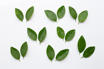 Green lime leaves on white background.