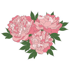 Bouquet of hand drawing peonies. Vector graphic flowers. Decorative element for cards, invitations. Template greeting card