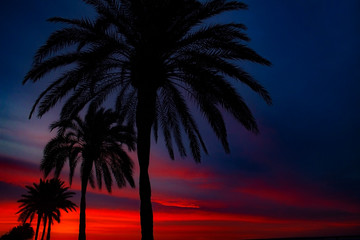 Palm trees on island Mallorca beach. Photo for travel and vacation on a tropical beach concept.