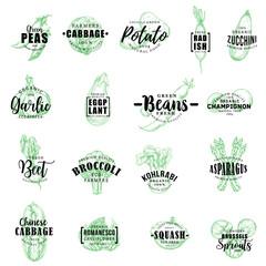 Farm vegetables vector sketch lettering