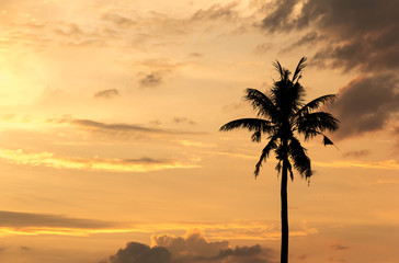 Palm tree with sunset sky background