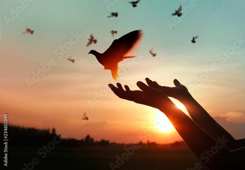 Leinwandbilder Woman praying and free the birds to nature on sunset background, hope concept