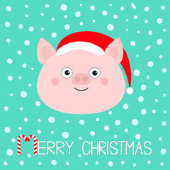 Merry Christmas. Pig piglet face. Cute cartoon funny baby character. Hog swine sow animal. Santa hat. Chinise symbol of 2019 new year. Zodiac sign. Flat design. White background. Snow flake.