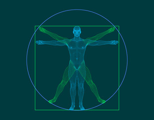 Vitruvian man. Wireframe human body. Vector outline illustration