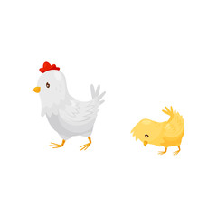 White hen walking with little yellow chick. Domestic fowl. Farm birds. Flat vector icon