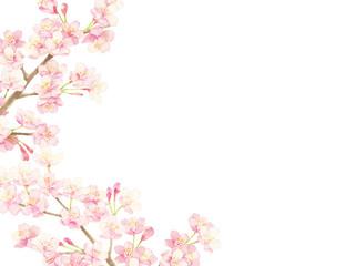 桜 水彩イラスト