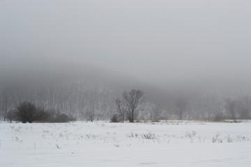 Beautiful winter meditative landscape.