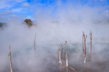 Steaming hot pool in Kuirau park, Rotorua, New Zealand