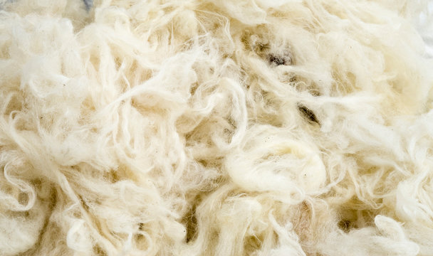 Pile of new wool closeup