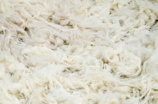 Pile of new wool closeup