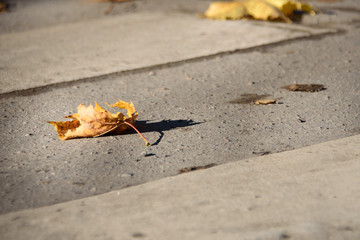 autumn yellow leaves on the pavement in the city