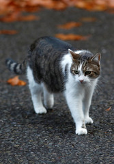 Larry, the Downing Street cat, walks outside number 10, in London