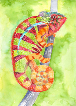 Chameleon - drawing watercolor. Multi-colored lizard. Use printed materials, signs, items, websites, maps, posters, postcards, packaging.
