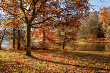 Autumnal cene of fallen leaves, colorful trees and a still lake
