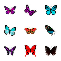 Set of butterfly realistic symbols with demophoon, striped purple crow, precis almana and other icons for your web mobile app logo design.