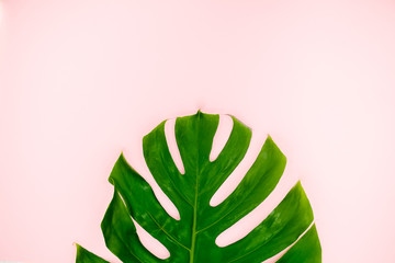 Tropical leaves Monstera on pink background. Flat lay, top view/Palm Leaf on a pink abstract background