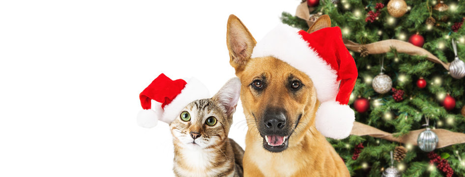 Dog and Cat Christmas Web Banner