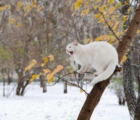angry white cat on a tree yelling screaming