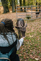 Young girl with dreadlocks feeds from the hands of a deer in the park of the Blatna castle. Czech Republic