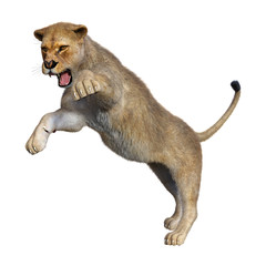 3D Rendering Female Lion on White