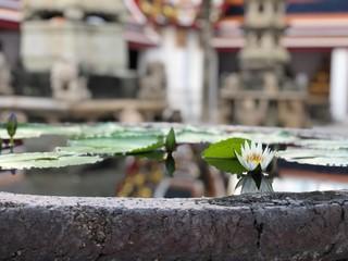 Temple lotus in water