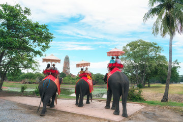 ride elephant travel in Ayutthaya
