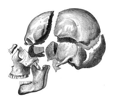 Vintage illustration of anatomy, skull with jaw and teeth, bone decomposition view