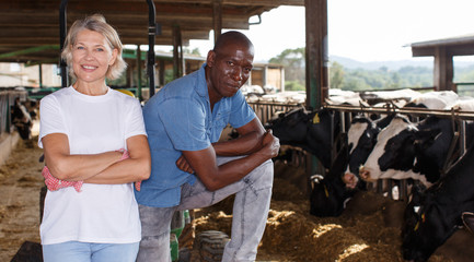 Female and male proffesional farmers  standing near cow at  farm