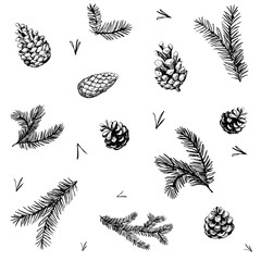 Seamless pattern with pine brunches and cones. Hand drawn vector