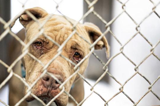 Sad Old Homeless Dog in Shelter Kennel