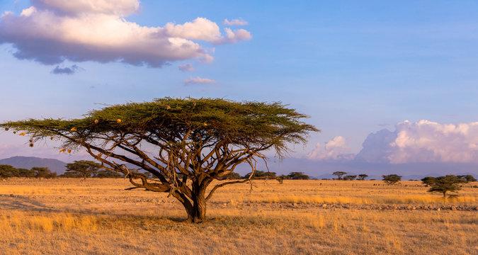 Eine der schönsten Landschaften in Afrika, Massai Mara, Kenia
