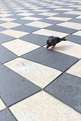Taube am Place Mazena in Nizza