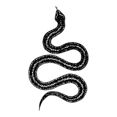 Hand drawn vintage snake, vector  illustration. Snake silhouette illustration. Vector tattoo design. Graphic sketch for posters, tattoo, clothes, t-shirt design, pins, patches, badges, stickers.