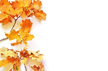 Orange and yellow oak leaves on a white background. Mockup