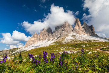 Tre Cime Di Lavaredo mountain Peaks in the Alps at sunny day with flowers foreground