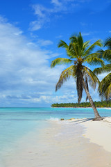 Foto op Plexiglas Caraïben beach, palm, tropical, sea, island, tree, ocean, sand, travel, sky, paradise, water, vacation, landscape, blue, summer, coconut, nature, coast, palm tree, holiday, caribbean, beautiful, relax, sunny