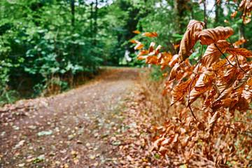 Die letzten trockenen Blätter hängen am Ast