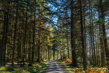 Views along the Raiders Road in the Galloway Forest Park during the autumn season