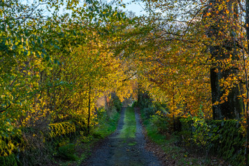 A rural Scottish road with brightly lit autumnal trees
