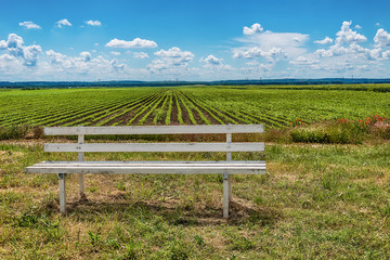 A white wooden bench and green agriculture fields in blue sky with clouds