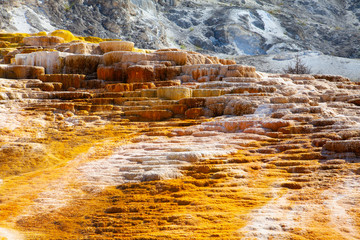 Mammoth Hot Springs Terraces, Wyoming, USA