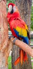 Colorful parrot on perch in bird park Monte Casino Johannesburg Gauteng South Africa