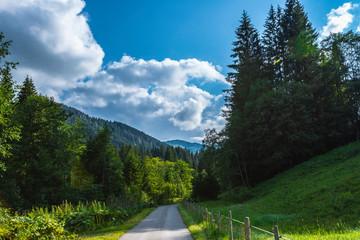 Forstweg durch einen Bergwald