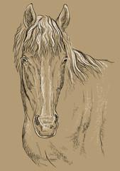 Horse portrait-14 on brown background
