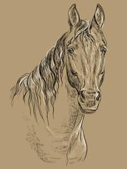 Horse portrait-19 on brown background
