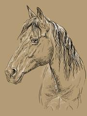 Horse portrait-20 on brown background