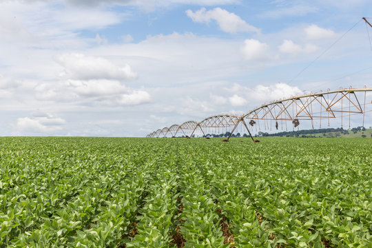Plantação de Soja no Centro-Oeste brasileiro irrigado artificialmente com Pivô Central