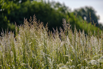 summer plants and bents on blur background in evening sun. Textured pattern
