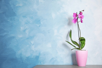 Tuinposter Orchidee Beautiful tropical orchid flower in pot on table near color wall. Space for text
